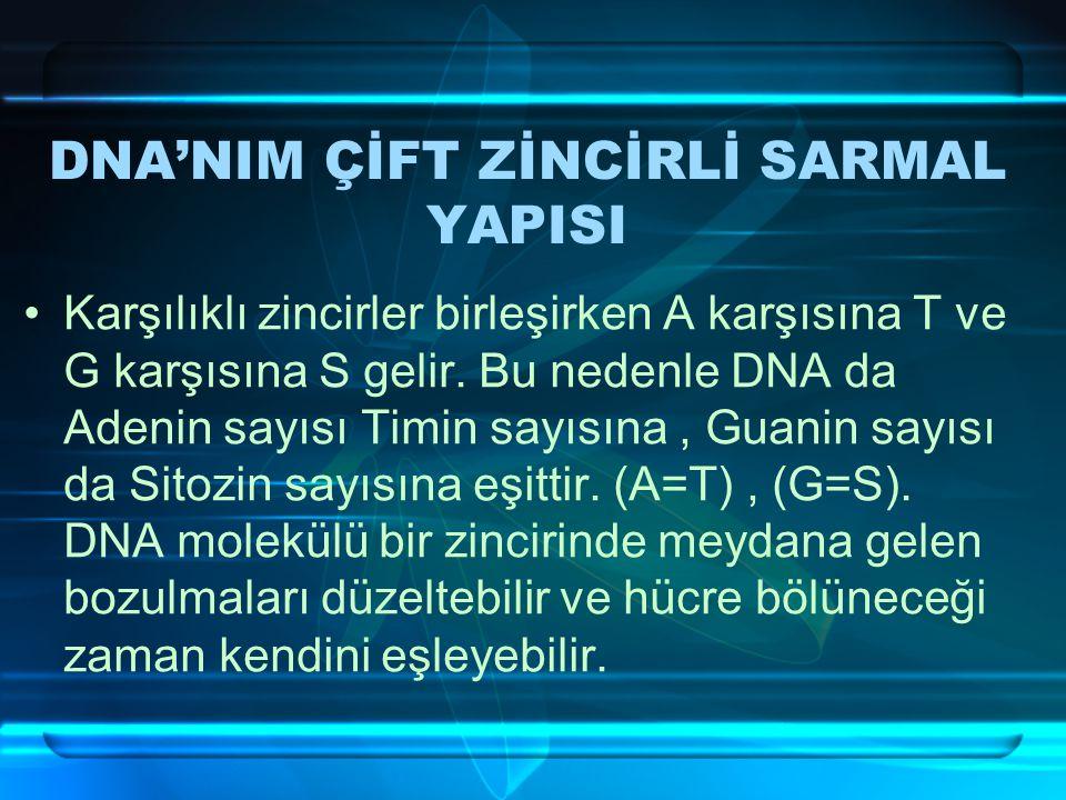DNA'NIM ÇİFT ZİNCİRLİ SARMAL YAPISI