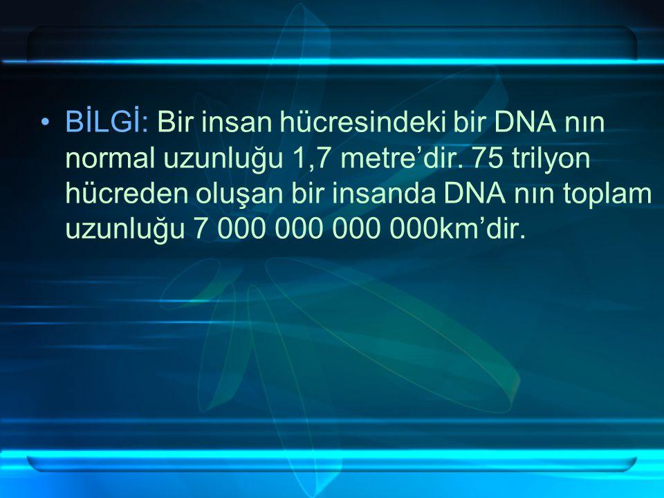 BİLGİ: Bir insan hücresindeki bir DNA nın normal uzunluğu 1,7 metre'dir.