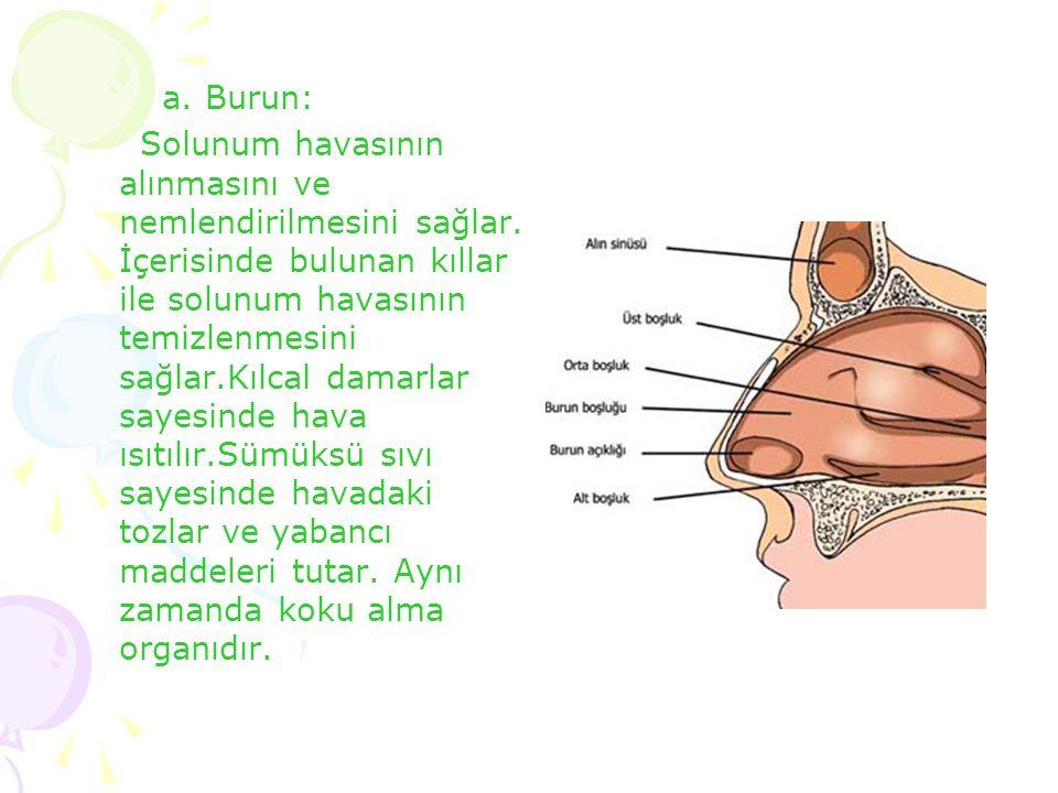 a. Burun: