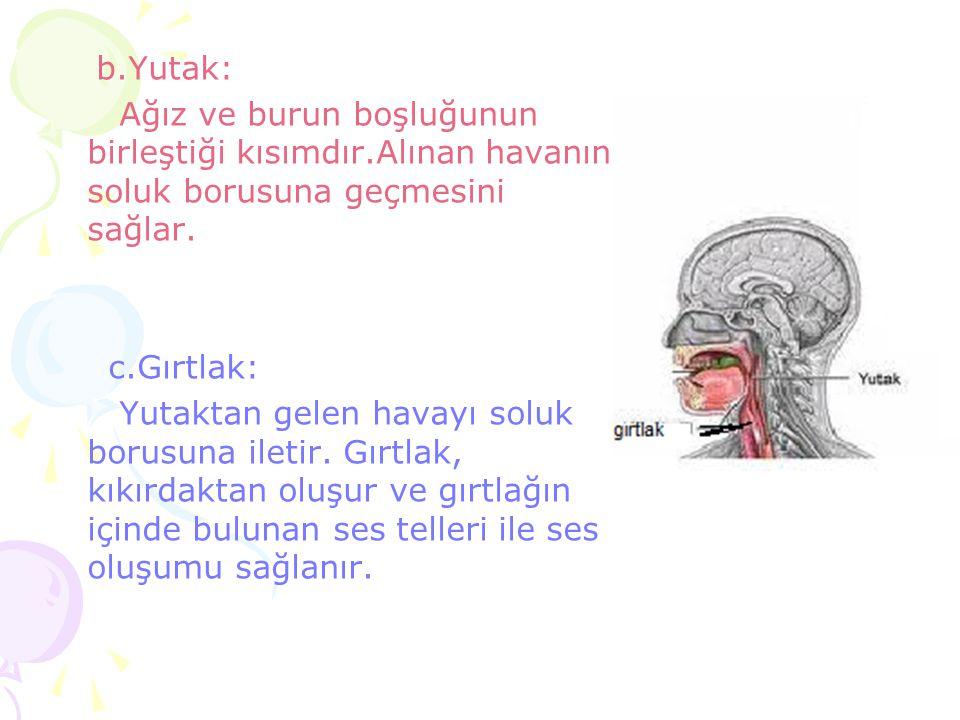 b.Yutak: Ağız ve burun boşluğunun birleştiği kısımdır.Alınan havanın soluk borusuna geçmesini sağlar.