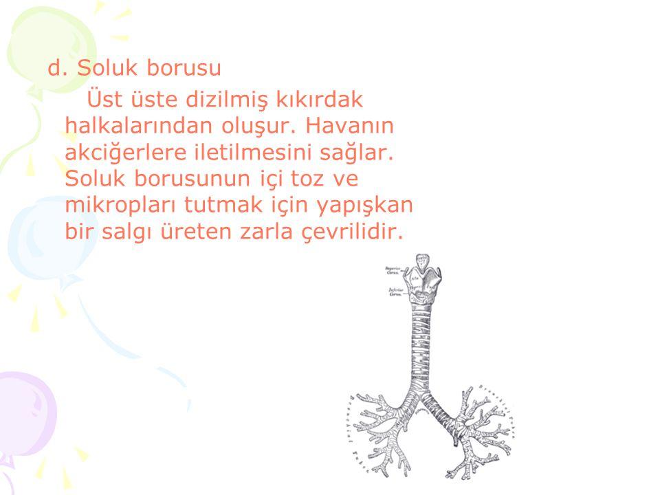 d. Soluk borusu
