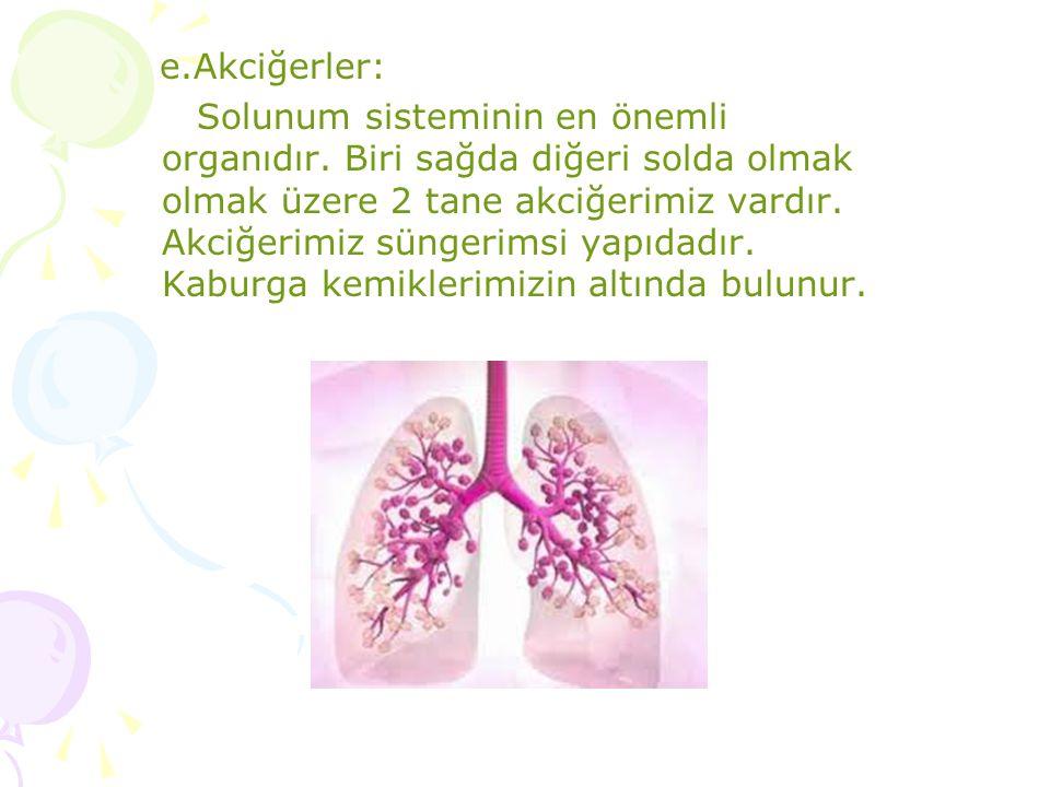 e.Akciğerler: