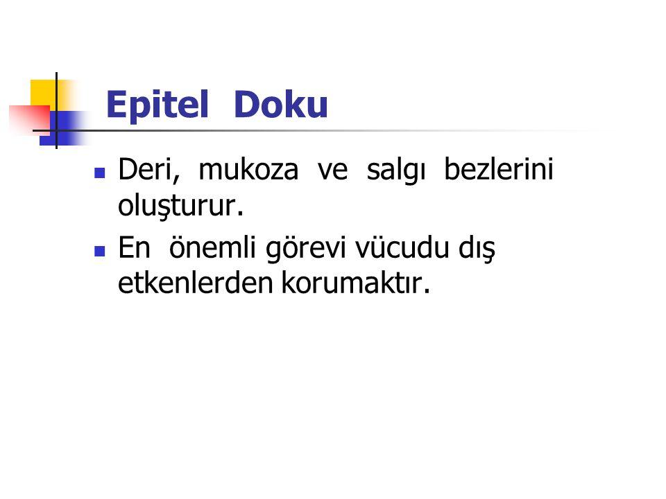 Epitel Doku Deri, mukoza ve salgı bezlerini oluşturur.