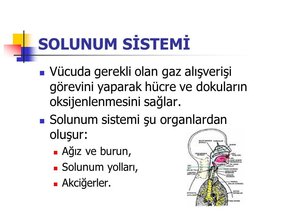 SOLUNUM SİSTEMİ Vücuda gerekli olan gaz alışverişi görevini yaparak hücre ve dokuların oksijenlenmesini sağlar.