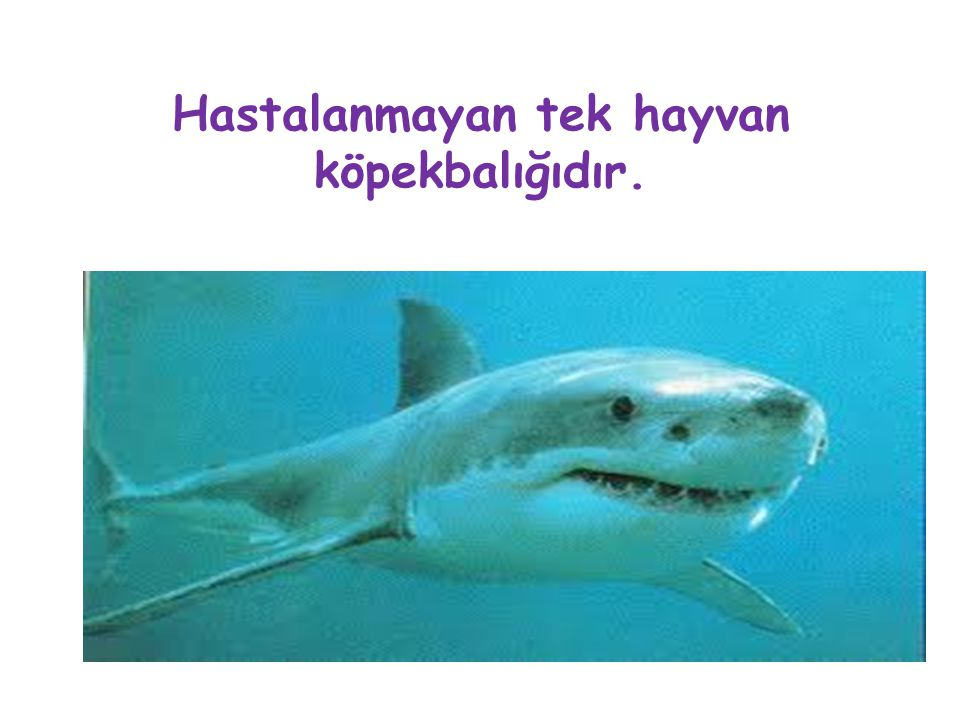 Hastalanmayan tek hayvan köpekbalığıdır.