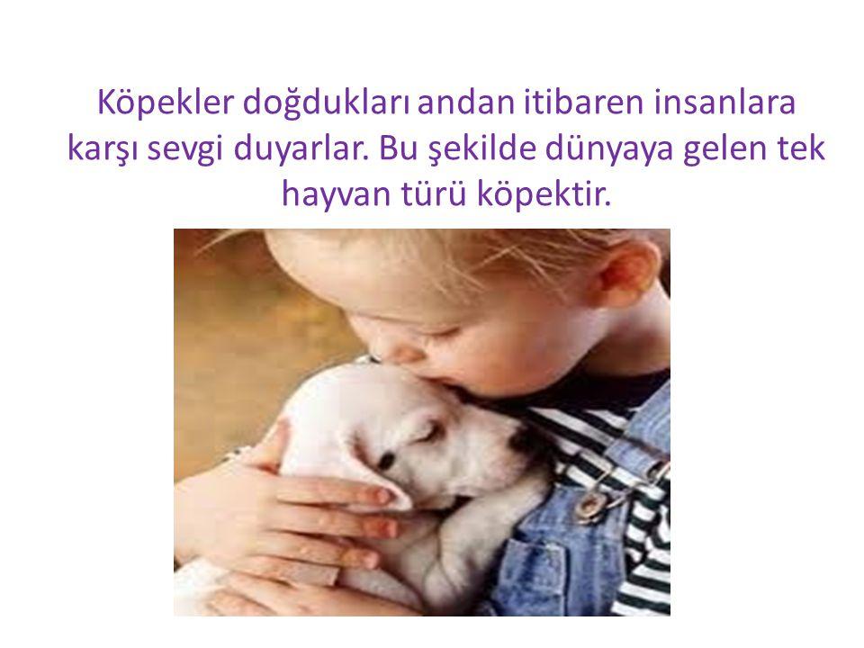 Köpekler doğdukları andan itibaren insanlara karşı sevgi duyarlar