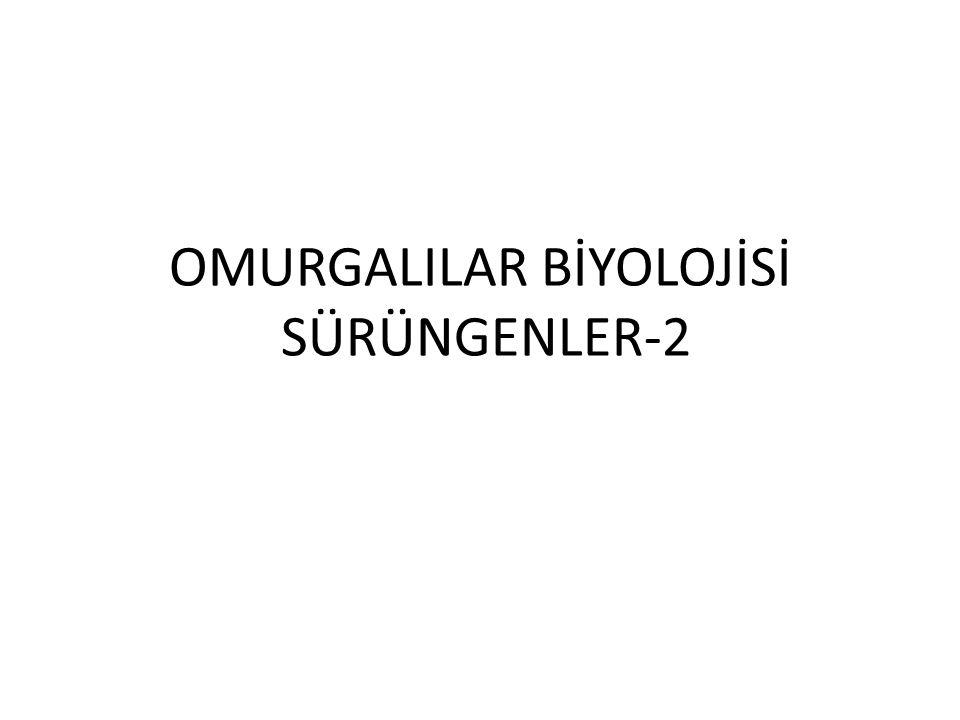 OMURGALILAR BİYOLOJİSİ SÜRÜNGENLER-2