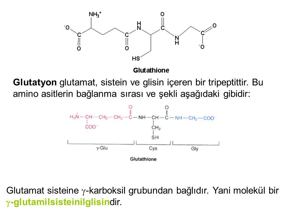 Glutatyon glutamat, sistein ve glisin içeren bir tripeptittir