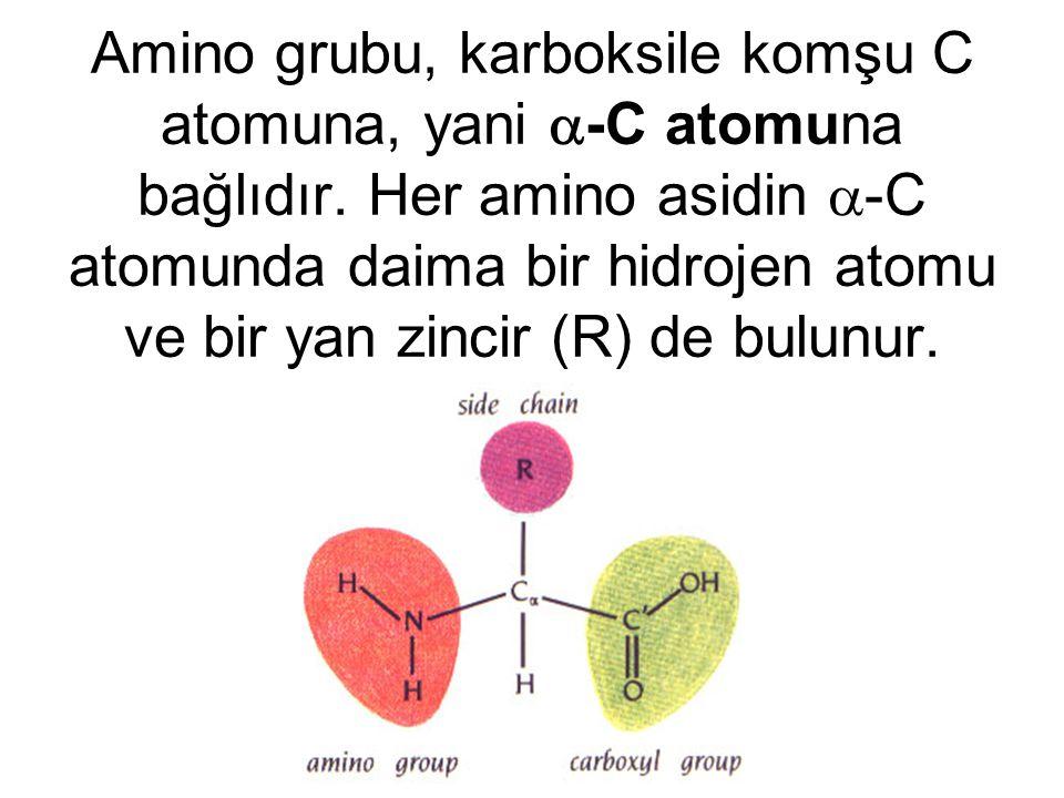 Amino grubu, karboksile komşu C atomuna, yani -C atomuna bağlıdır