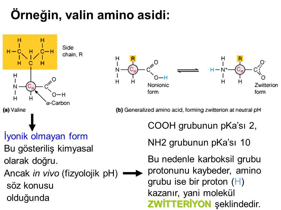Örneğin, valin amino asidi: