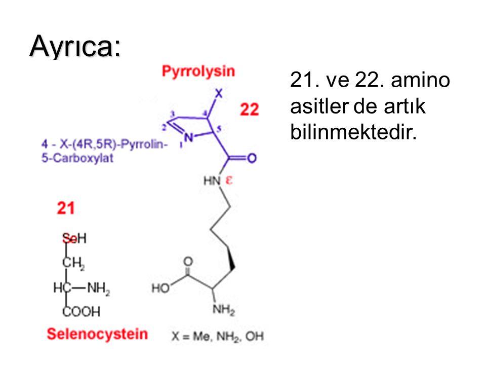Ayrıca: 21. ve 22. amino asitler de artık bilinmektedir.