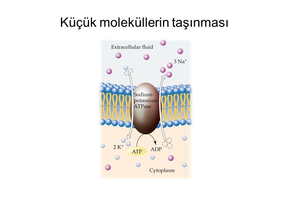 Küçük moleküllerin taşınması