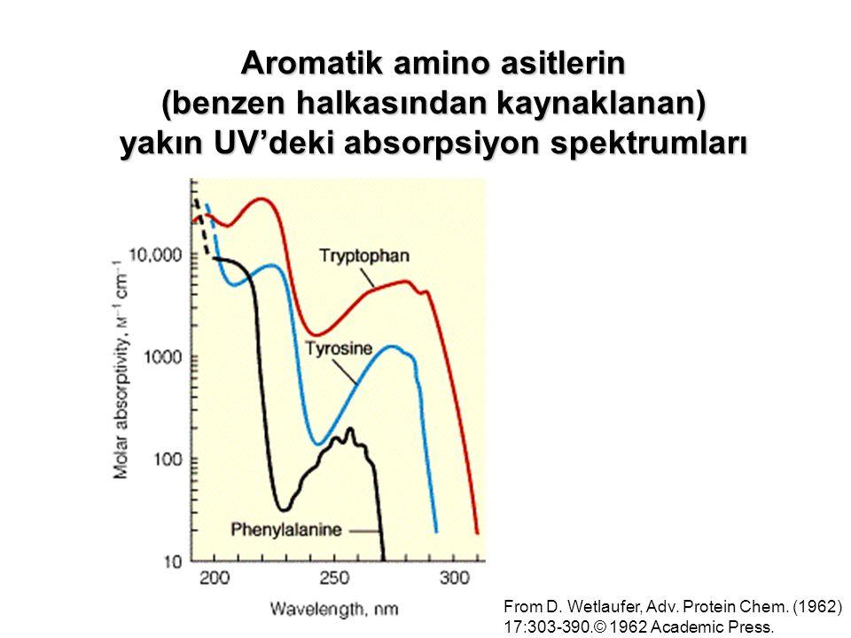 Aromatik amino asitlerin (benzen halkasından kaynaklanan)