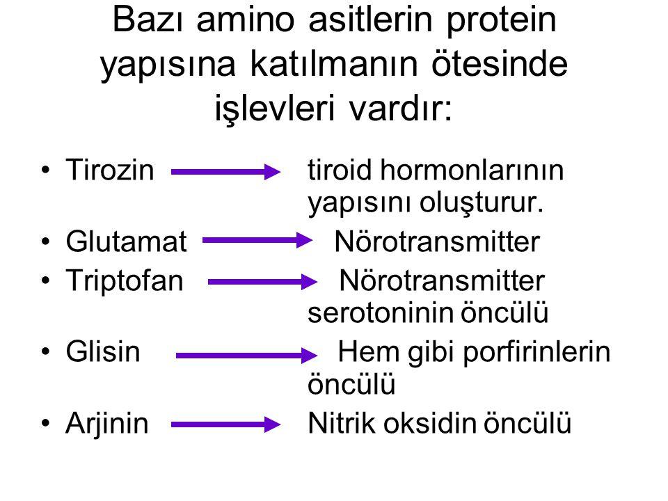 Bazı amino asitlerin protein yapısına katılmanın ötesinde işlevleri vardır: