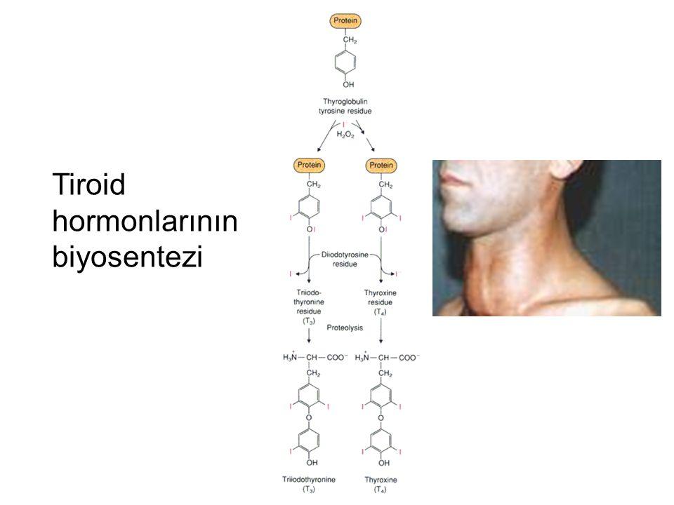 Tiroid hormonlarının biyosentezi