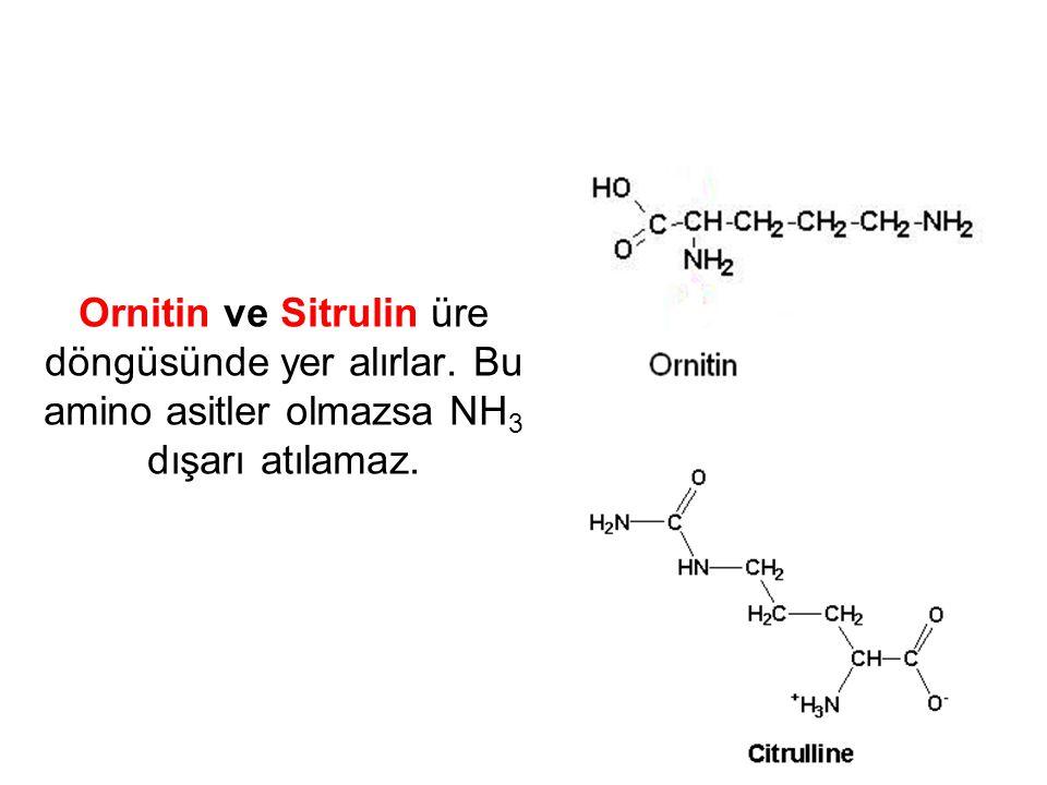 Ornitin ve Sitrulin üre döngüsünde yer alırlar