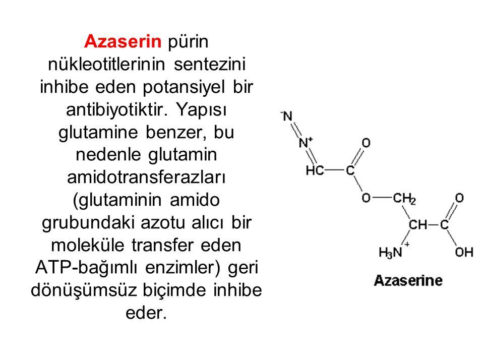 Azaserin pürin nükleotitlerinin sentezini inhibe eden potansiyel bir antibiyotiktir.