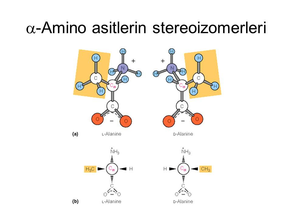 -Amino asitlerin stereoizomerleri