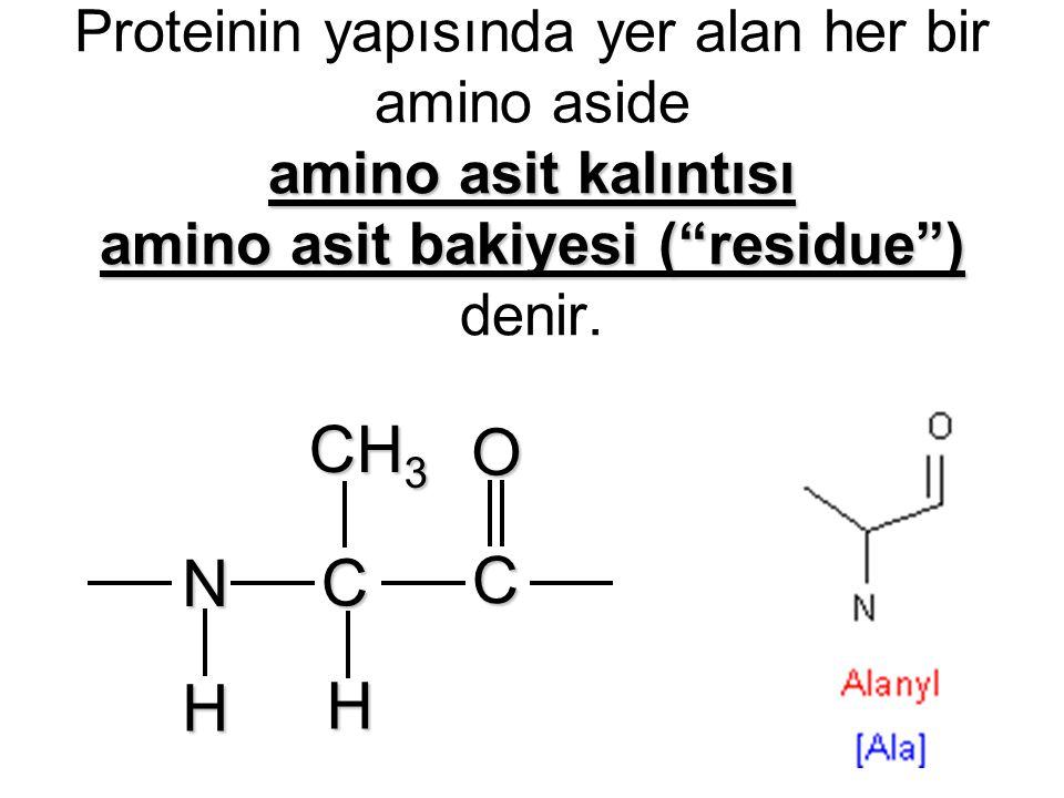 Proteinin yapısında yer alan her bir amino aside amino asit kalıntısı amino asit bakiyesi ( residue ) denir.