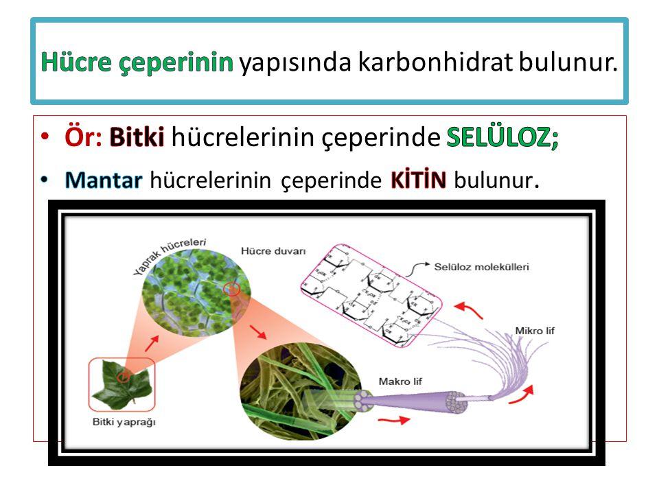 Hücre çeperinin yapısında karbonhidrat bulunur.