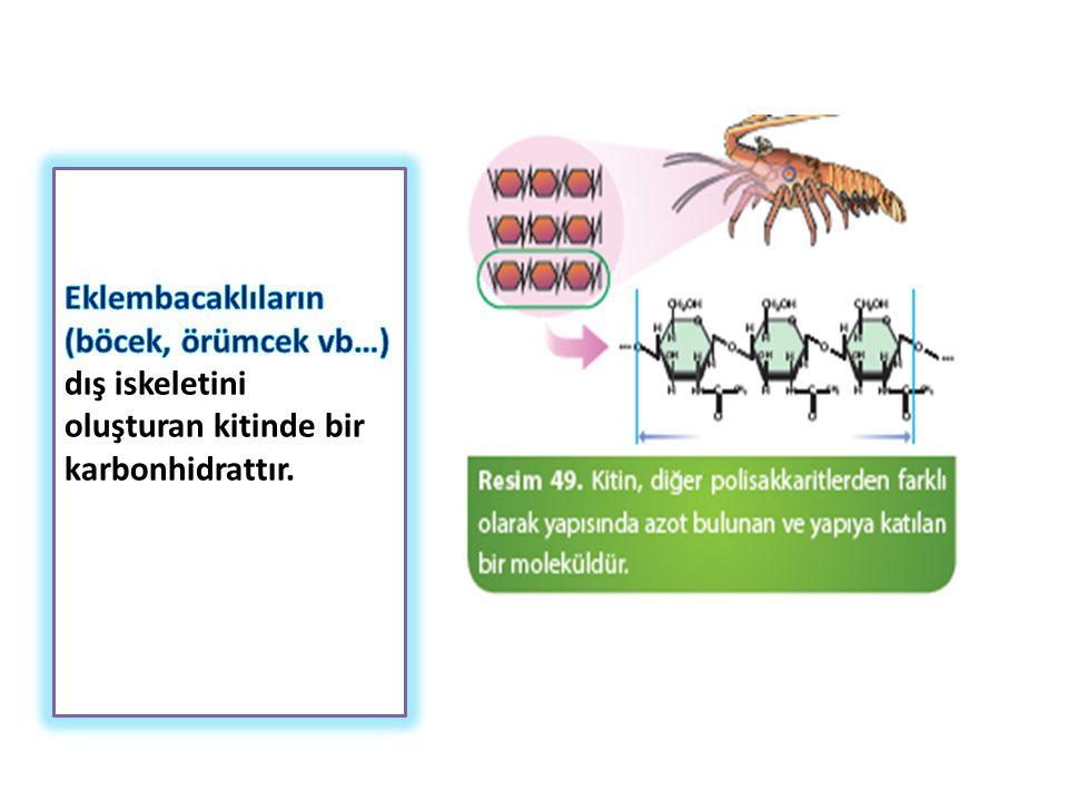 Eklembacaklıların (böcek, örümcek vb…) dış iskeletini oluşturan kitinde bir karbonhidrattır.