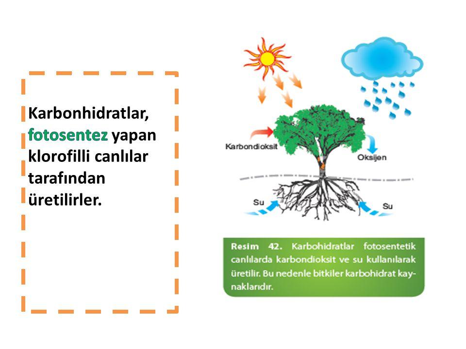 Karbonhidratlar, fotosentez yapan klorofilli canlılar tarafından üretilirler.