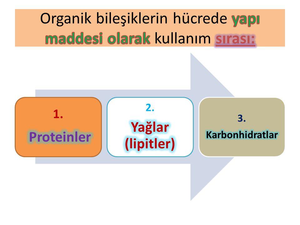 Organik bileşiklerin hücrede yapı maddesi olarak kullanım sırası: