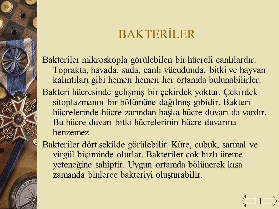 BAKTERİLER