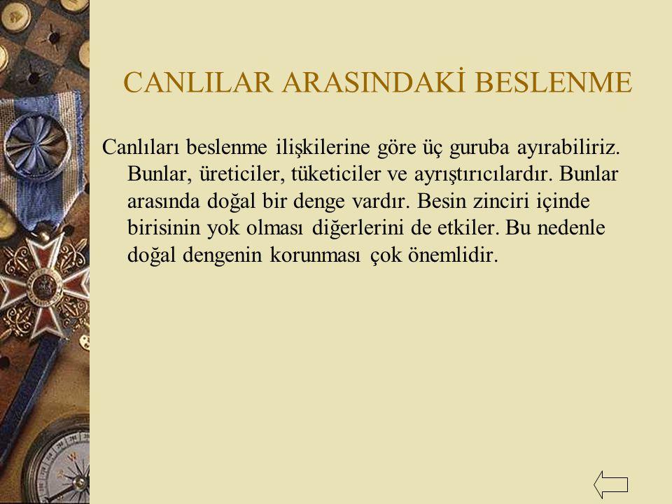CANLILAR ARASINDAKİ BESLENME
