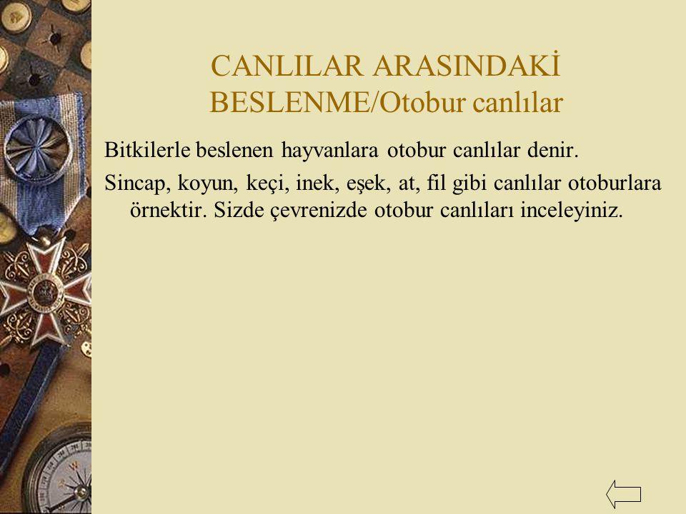 CANLILAR ARASINDAKİ BESLENME/Otobur canlılar