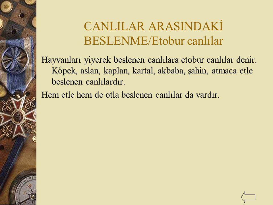 CANLILAR ARASINDAKİ BESLENME/Etobur canlılar