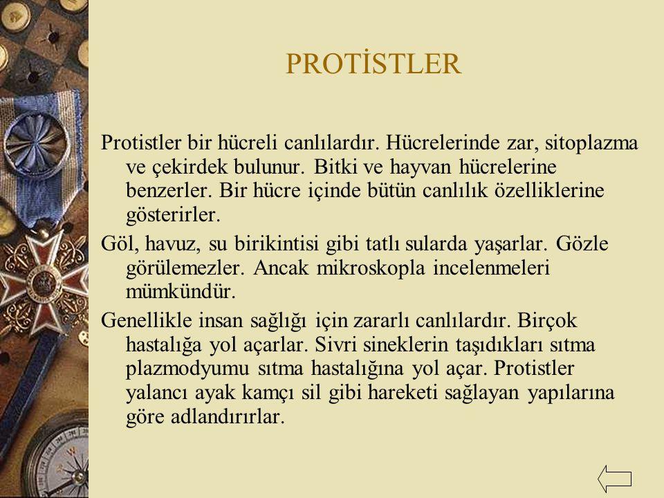 PROTİSTLER