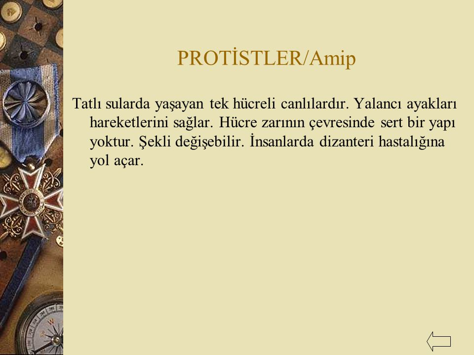 PROTİSTLER/Amip