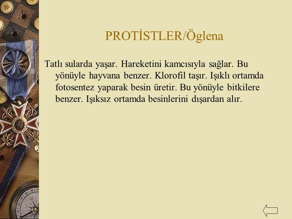 PROTİSTLER/Öglena
