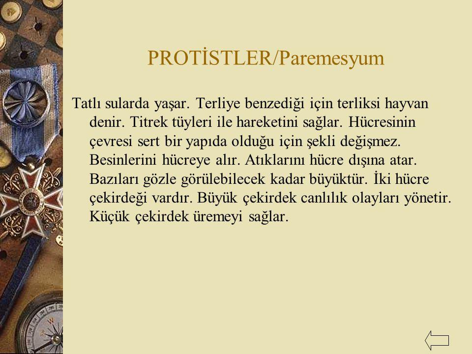 PROTİSTLER/Paremesyum