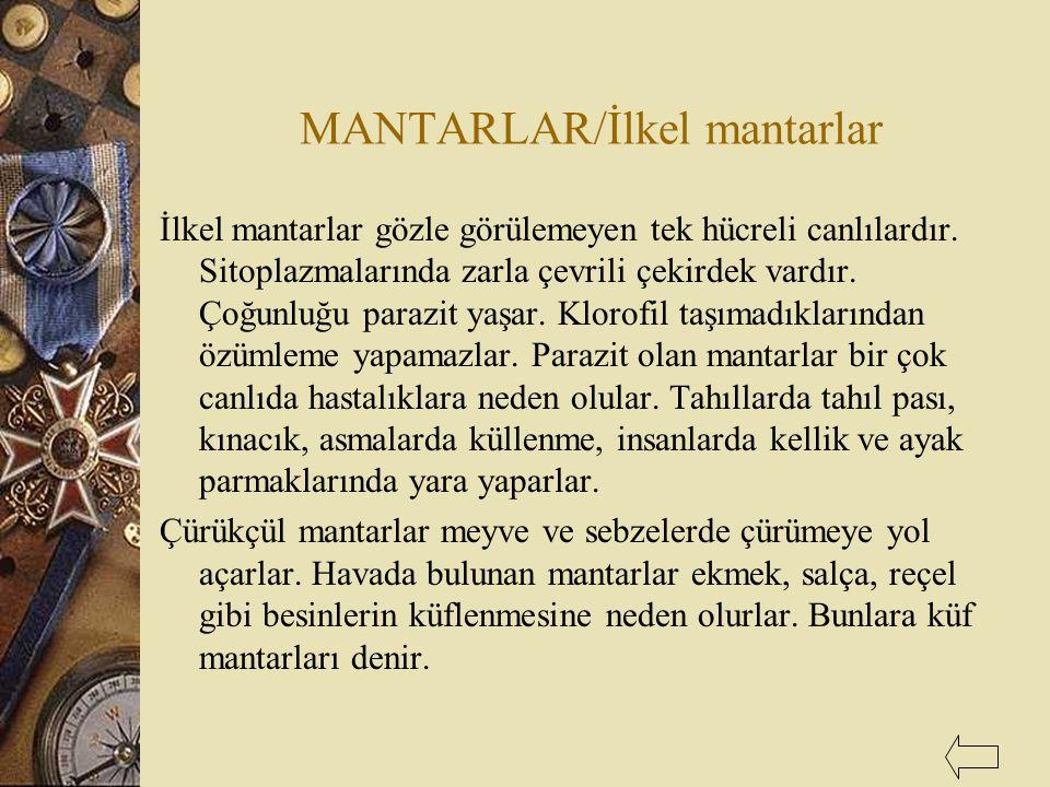 MANTARLAR/İlkel mantarlar