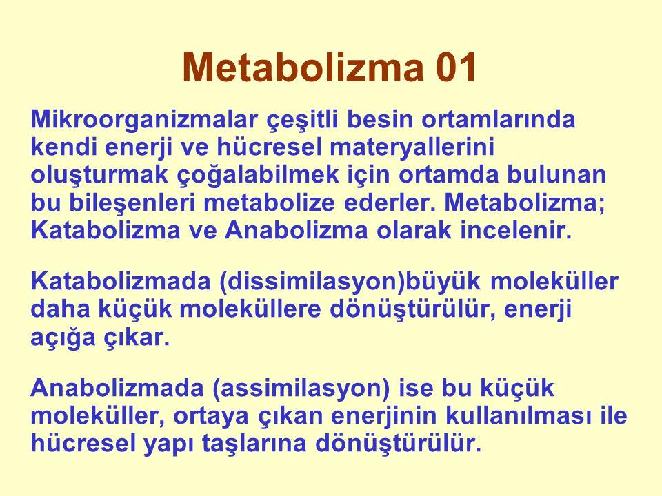 Metabolizma 01