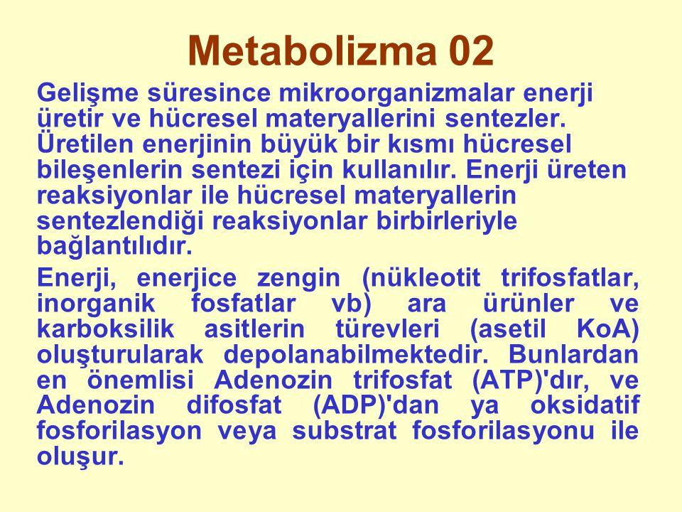 Metabolizma 02