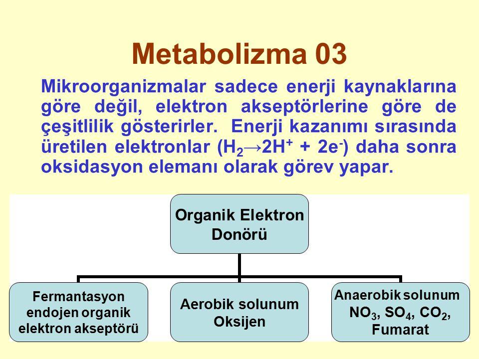 Metabolizma 03