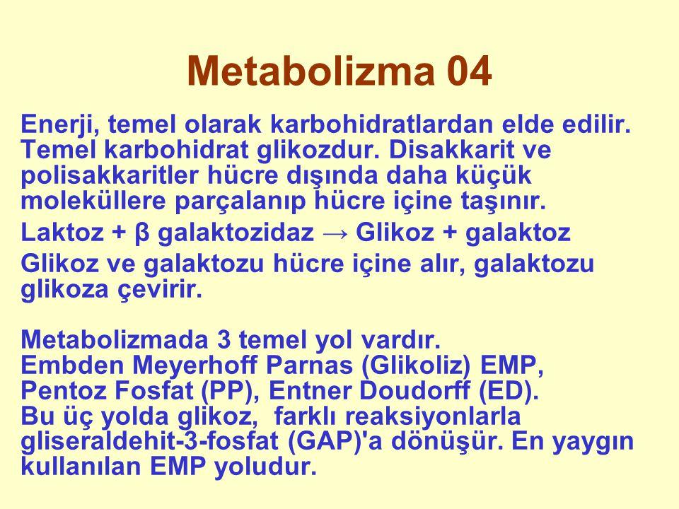 Metabolizma 04
