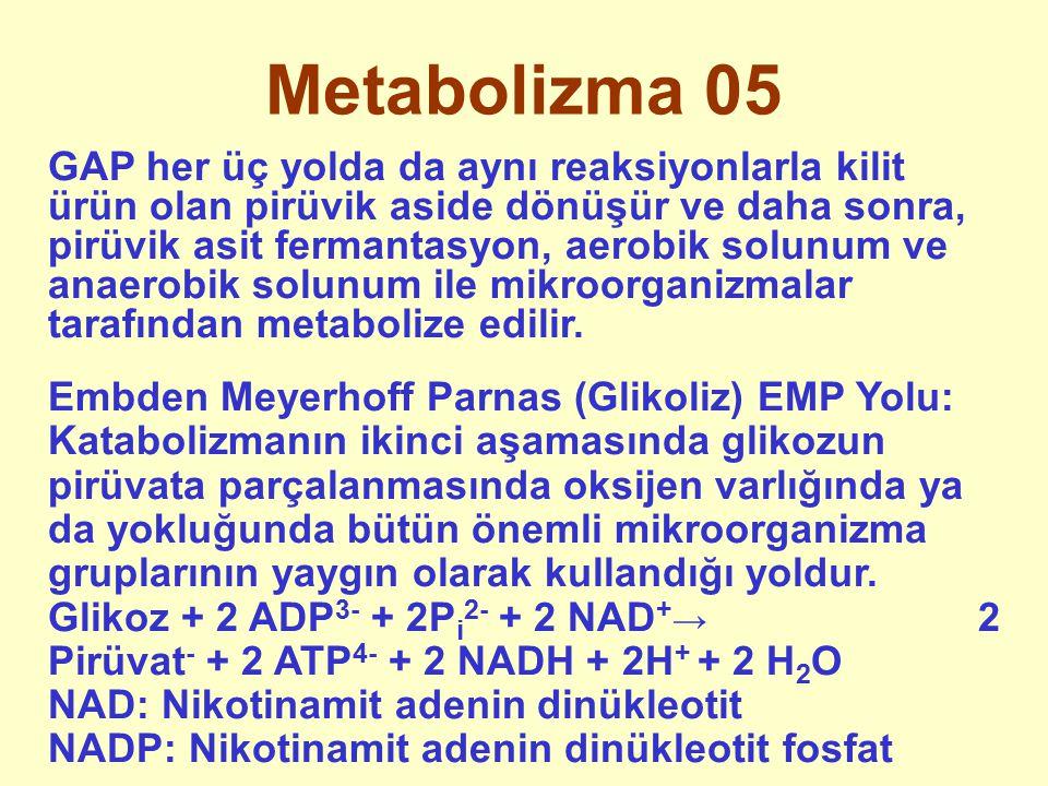 Metabolizma 05