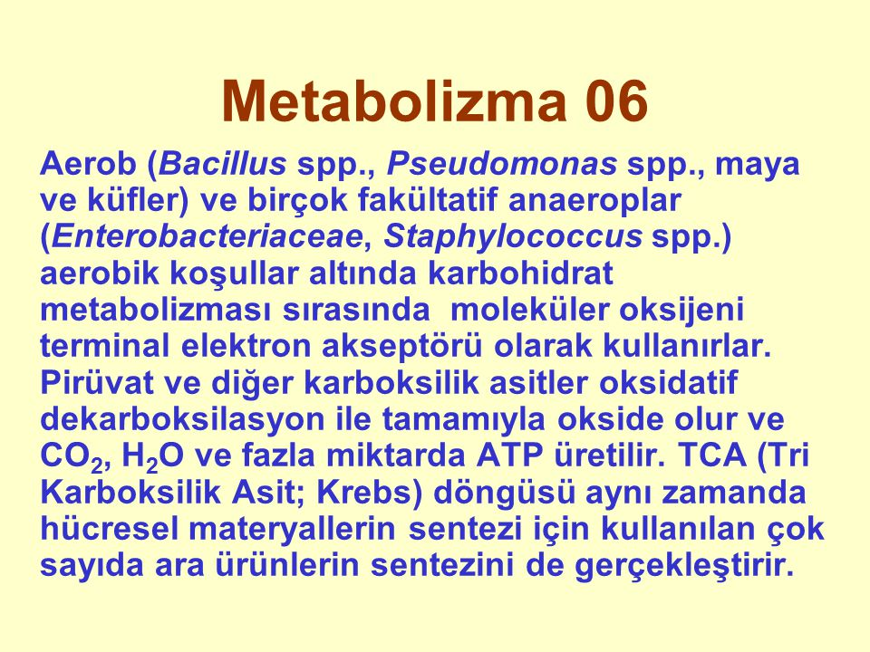 Metabolizma 06