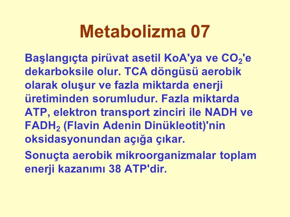 Metabolizma 07