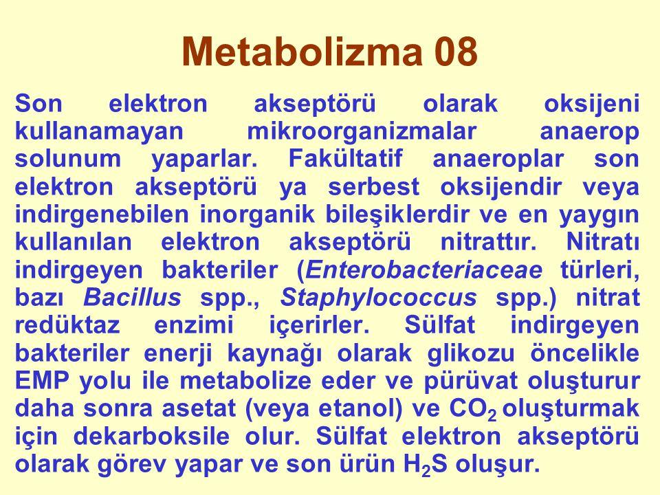 Metabolizma 08