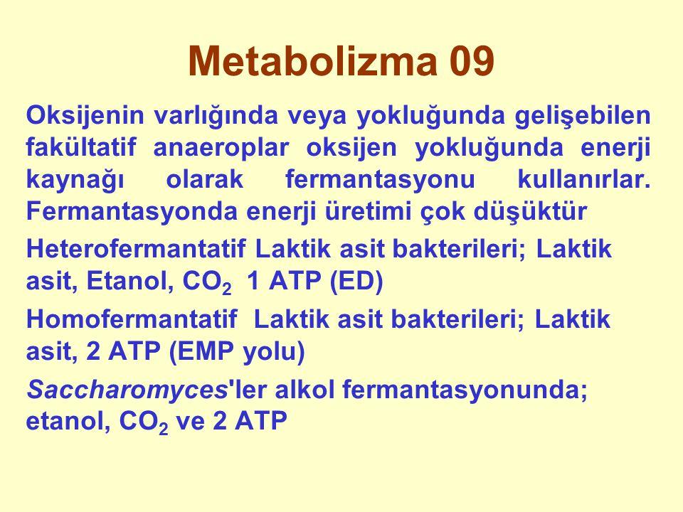 Metabolizma 09