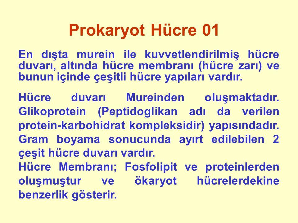 Prokaryot Hücre 01