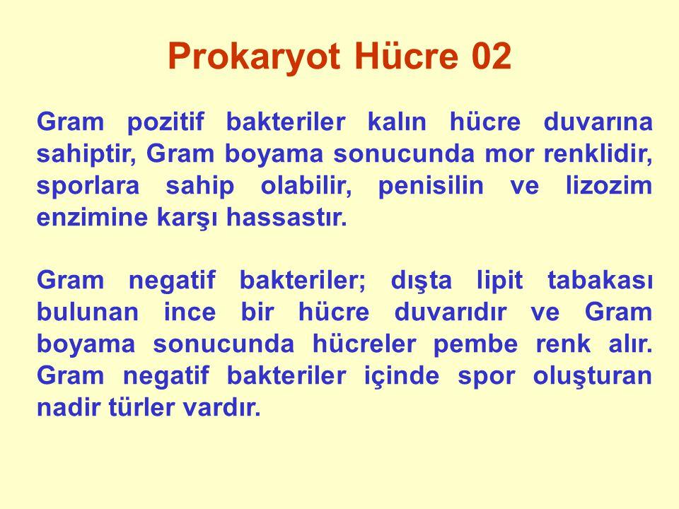 Prokaryot Hücre 02