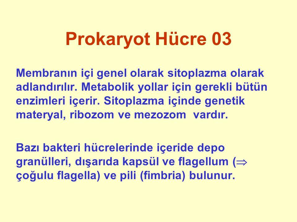 Prokaryot Hücre 03