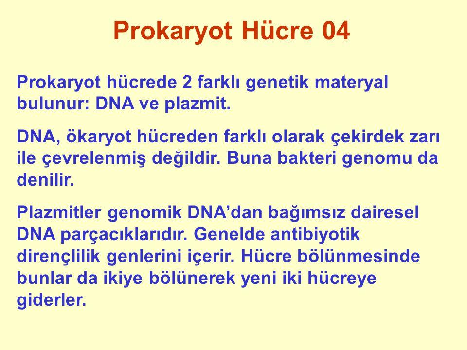 Prokaryot Hücre 04 Prokaryot hücrede 2 farklı genetik materyal bulunur: DNA ve plazmit.
