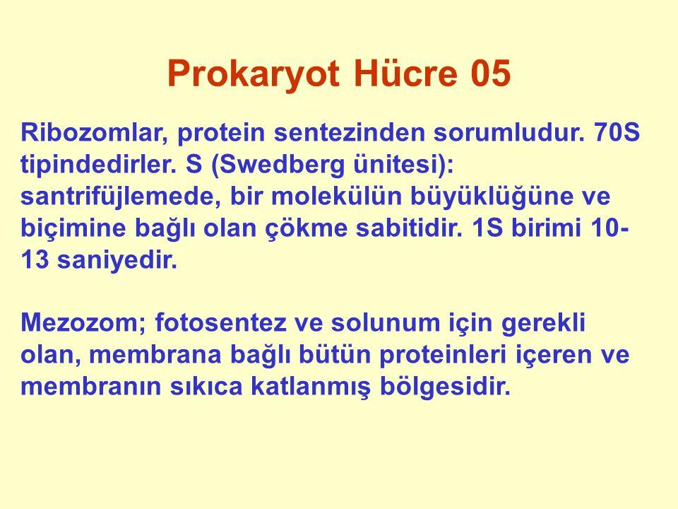 Prokaryot Hücre 05